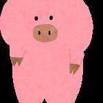 立っている豚